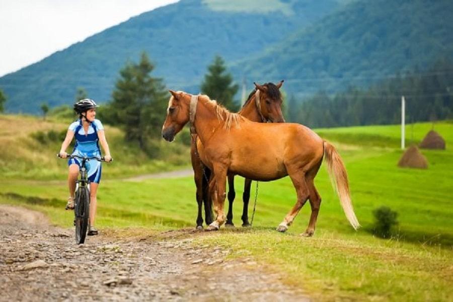 Ciclista encontrándose con caballos